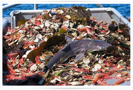 overfishing factsOverfishing Facts